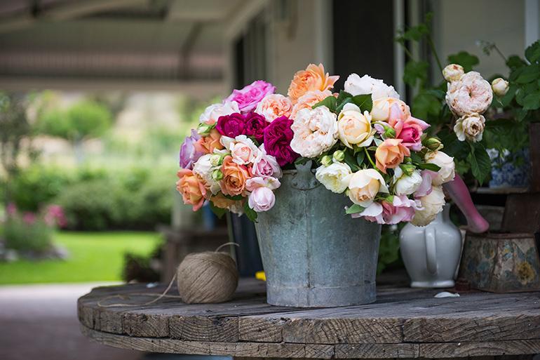 bucket_roses